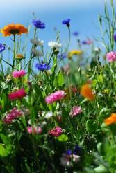 """Die bunte Blumenwiese symbolisiert das """"Lob der ganzen Schöpfung"""", Foto: Francesca Schellhaas/photocase.com"""
